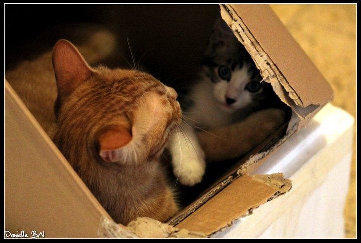 חתולים בארגזים. זה תמיד כיף.